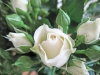 wedding-florists-perth-rose-bouquet